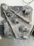 Pietra fossile